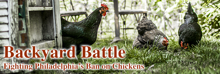 Backyard Battle: Fighting Philadelphia's Ban on Chickens